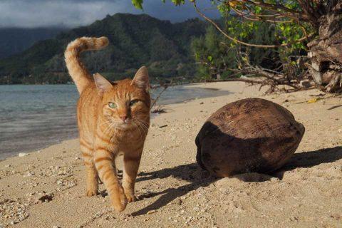 カゴプラ/世界ネコ歩き/ハワイ