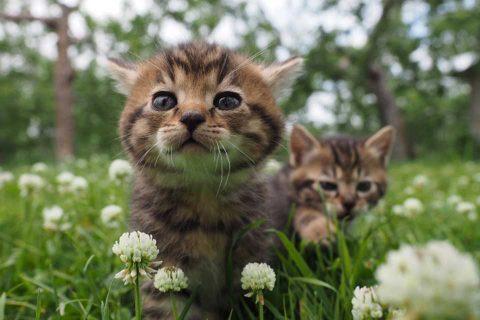 カゴプラ/世界ネコ歩き/メイン