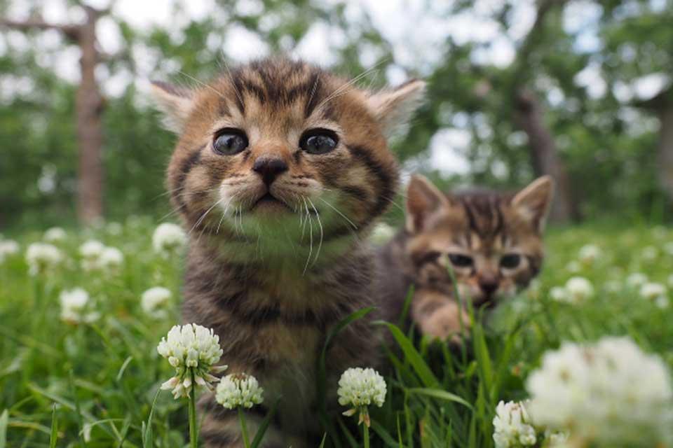 「岩合光昭の世界ネコ歩き」劇場版、12月2日より上映スタート!