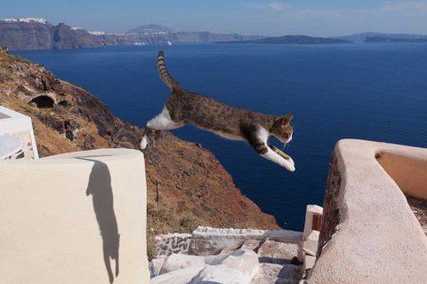 カゴプラ/世界ネコ歩き/ギリシャ