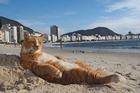 カゴプラ/世界ネコ歩き/リオデジャネイロ