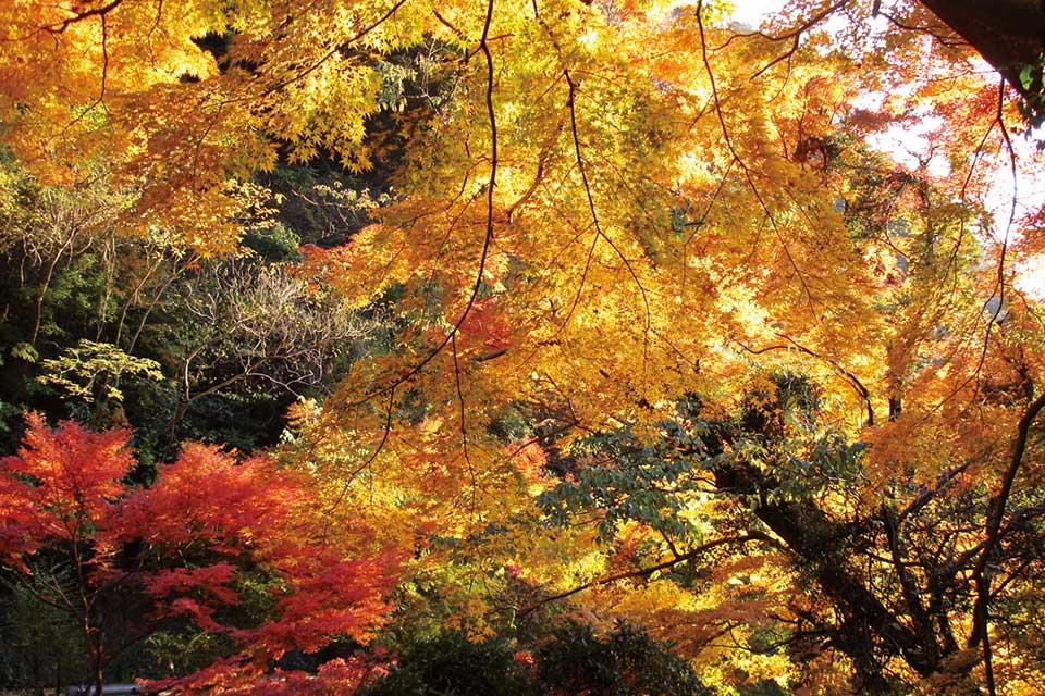 いよいよ秋です!鹿児島県内で紅葉めぐりしませんか?