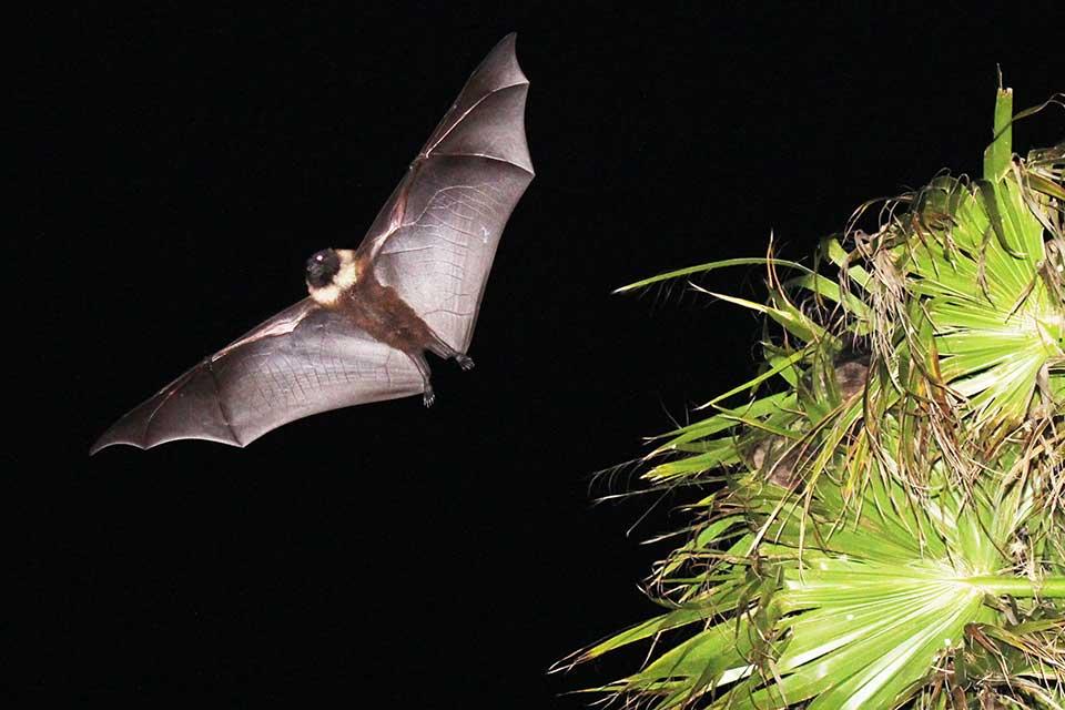 鹿児島国際大学博物館実習施設特別企画展 「鹿児島県の野生の哺乳類たち」
