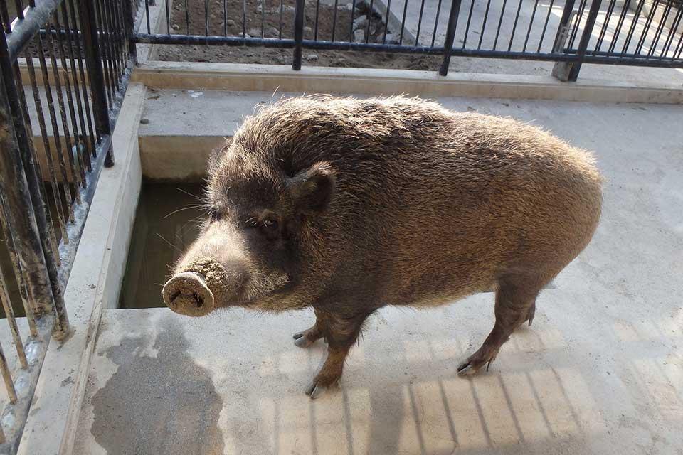 平川動物公園「お正月まつり」