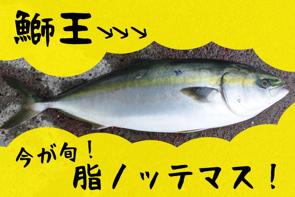 【長島大陸市場食堂】脂がのる今が旬!ブランド魚「鰤王」を堪能するため、いざ長島へ