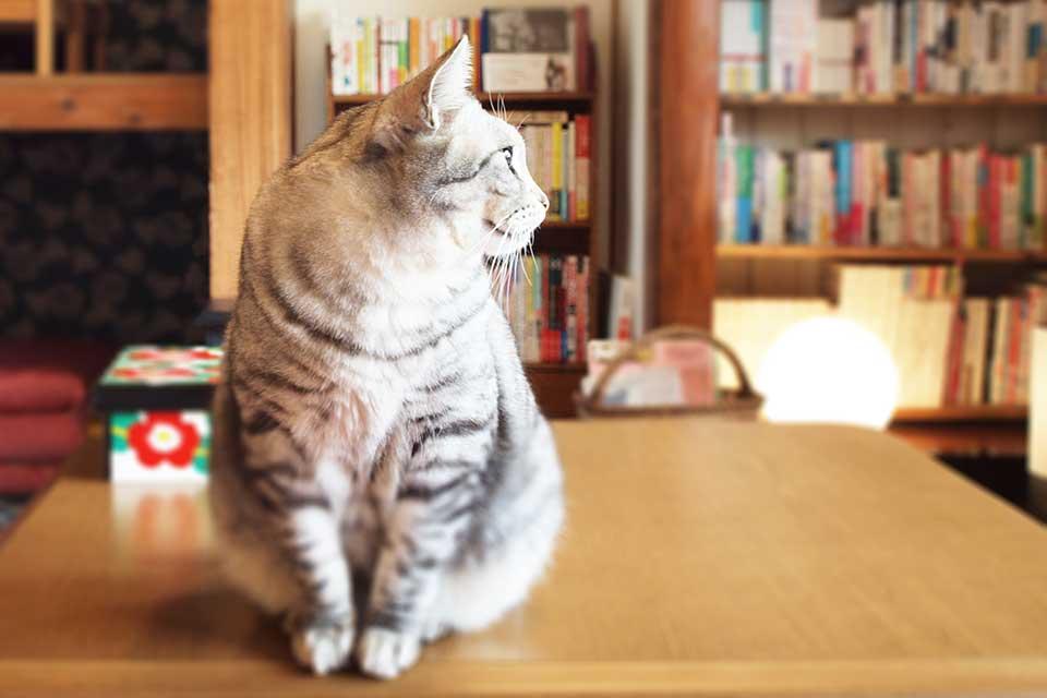 【そらのしっぽ】天文館のネコカフェが姶良市加治木町へ。静かな場所で本と猫に囲まれた癒しのひとときを