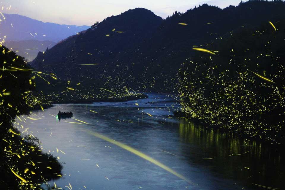 【ホタルイベント】夜空にホタルが舞う幻想的な景色。この時期しか見られない感動を体験!