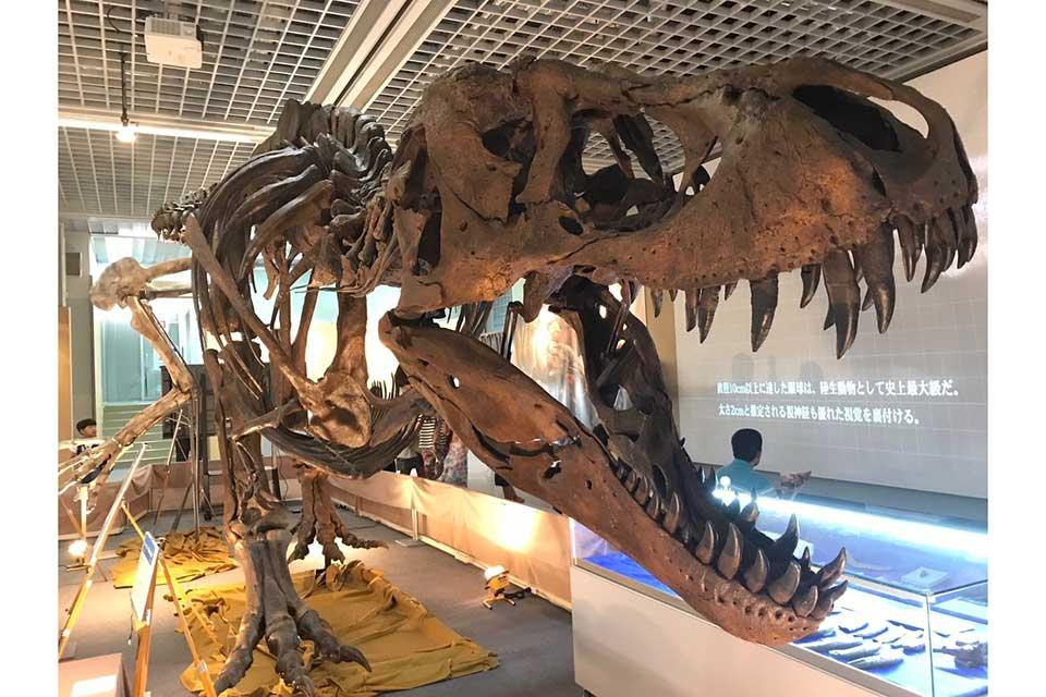 【大恐竜展2019】恐竜たちによる1億6000万年の物語。その迫力を見て感じてみて