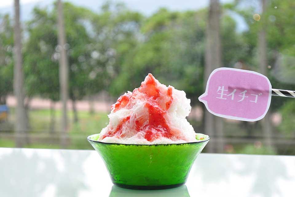 【蔵元八義×SAKODA 薩摩氷菓店】蔵元八義の天然氷が食べられるのは鹿児島ではココだけ!かき氷新体験を是非