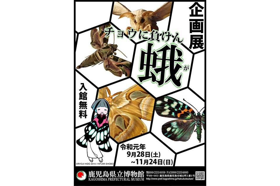 【鹿児島県立博物館】企画展 チョウに負けん蛾