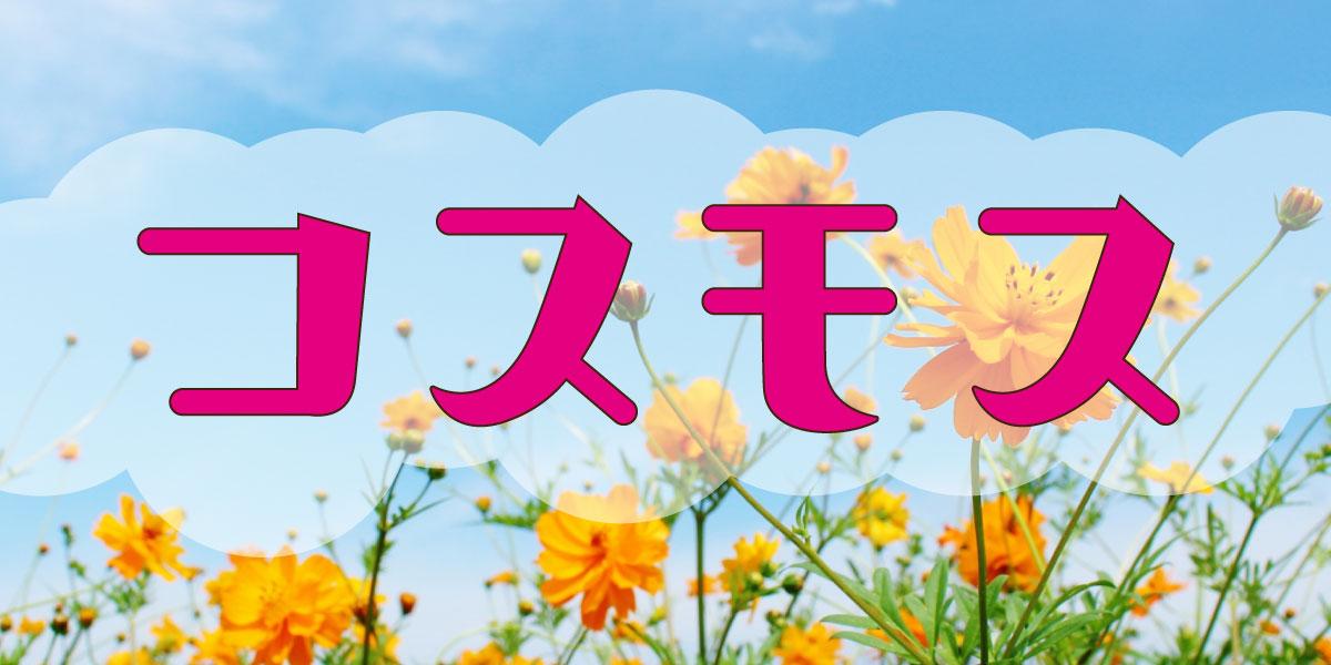 『鹿児島の秋・コスモススポット』