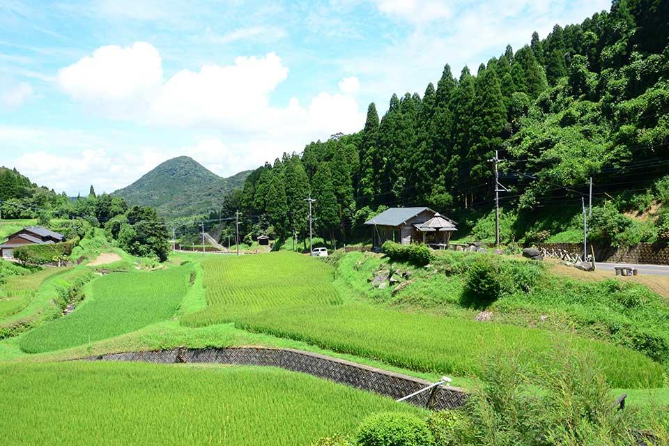 【Cafe 野の花】日吉の美しい棚田や野の花が織りなす癒しの景色で心も体もリフレッシュ