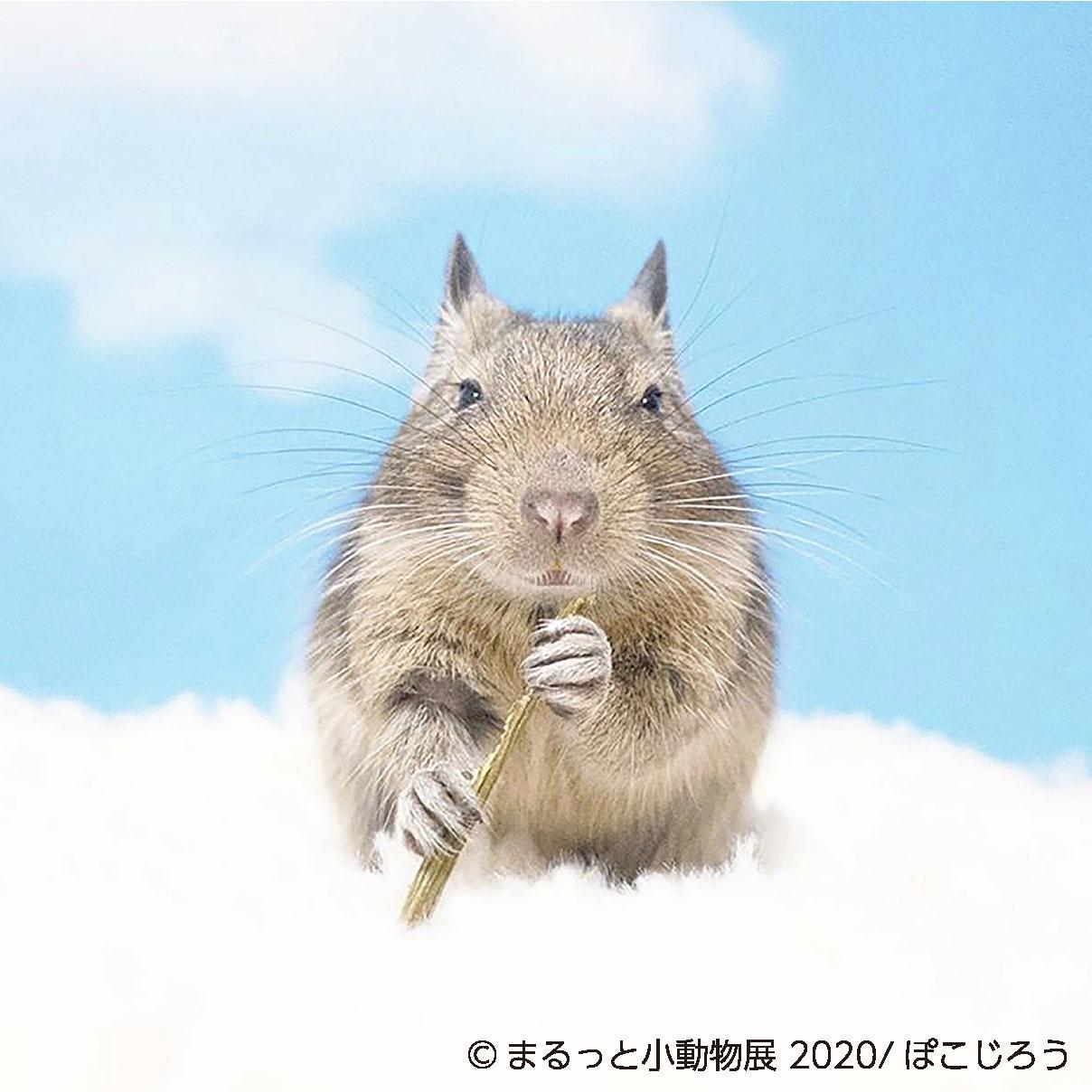 【鹿児島市】まるっと小動物in鹿児島