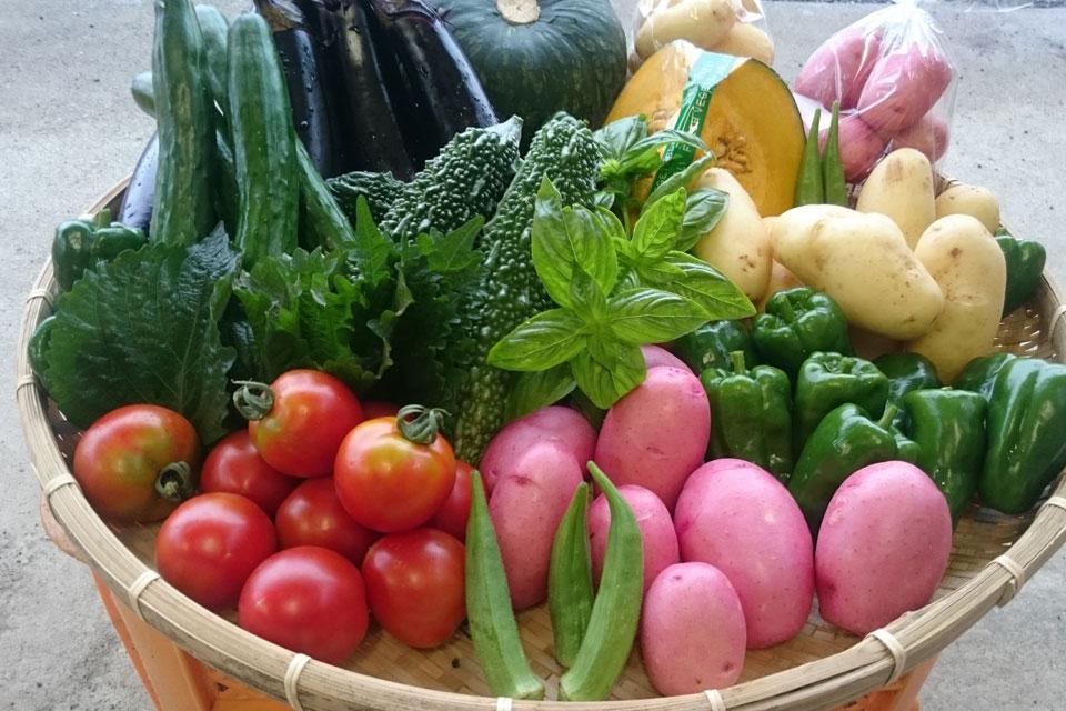 <b>【直売所 百姓道 八百屋(有元農場)】</b>野菜ソムリエが手がける、最高品質で安心・安全な5つ星野菜を購入できる直売所