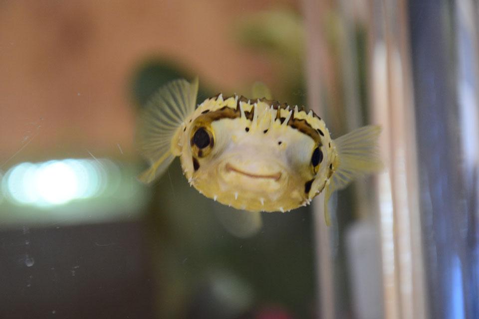 <b>【ぷくカフェ】</b>ゆっくり魚を見ながら過ごせる、癒しのカフェへ出かけよう